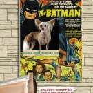 Chinese Crested Dog Poster Canvas Print -  Batman