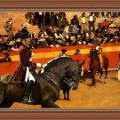 Petit Brabancon Fine Art Canvas Print - Ole!