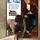 Bullmastiff Poster Canvas Print  -  Rebel Without a Cause Movie Poster