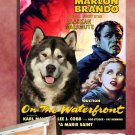Alaskan Malamute Poster Canvas Print -  On the Waterfront
