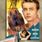 Bloodhound Canvas Print - East Of Eden Movie Poster