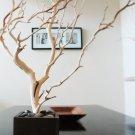 "30"" Natural Jewelry Tree"