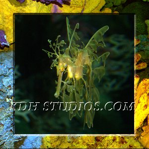 Golden Sea Dragon