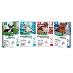 Advantage Dogs    4 pk    21 - 55 lbs