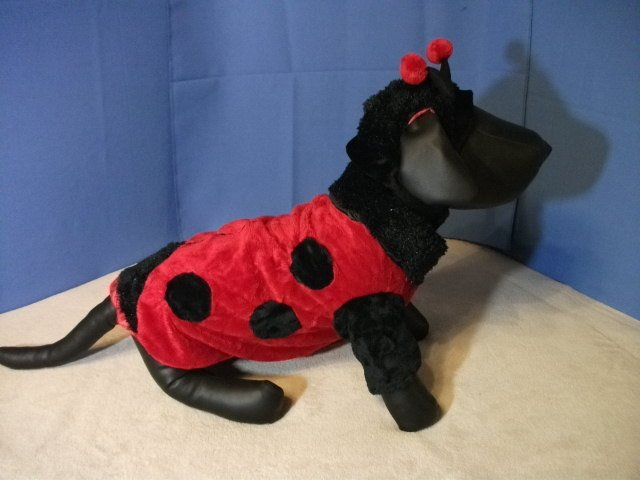 Pet Costume: Ladybug for Dog - Size M