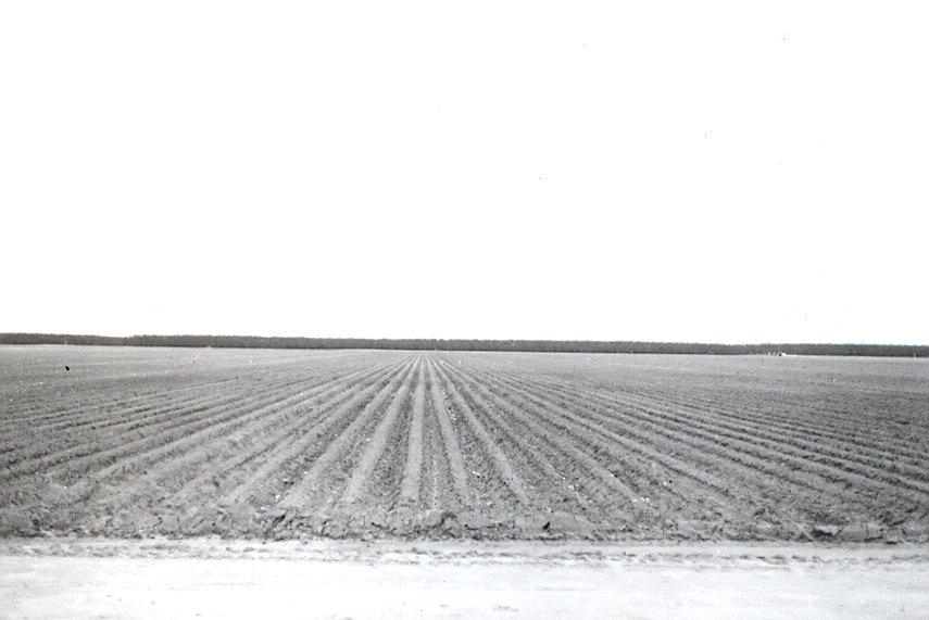 Developing Field