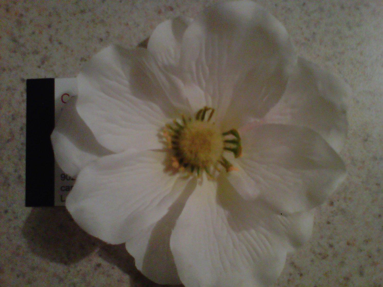 White Petalle Flower