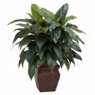 Cordyline w/Decorative Vase