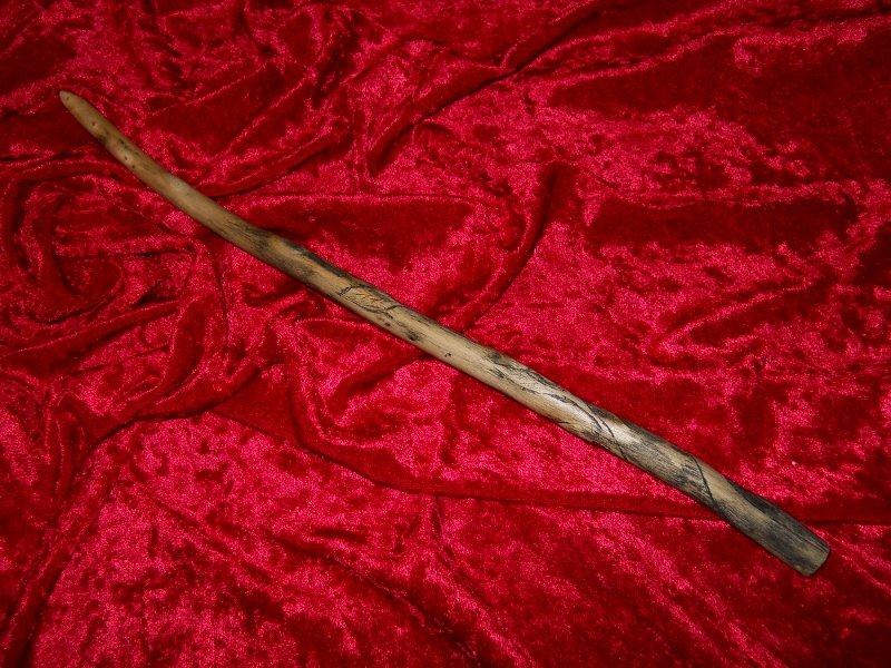 Elm �Black Leaved� Wand