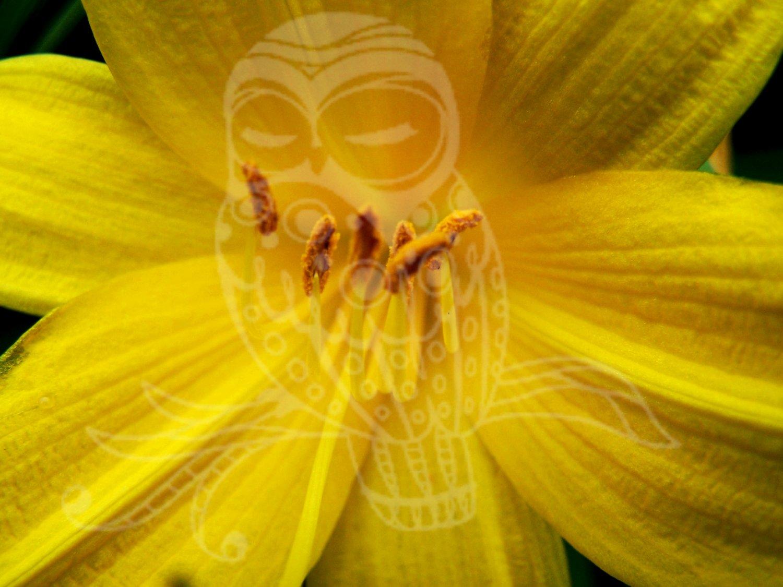 Pretty Flower Close Up