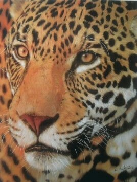 SET of 5 DAVID STRIBBLING Wildlife Limited Edition Prints