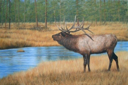 BULL ELK New DAVID STRIBBLING Ltd Ed Wildlife Print.