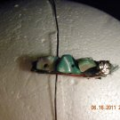 shell clip