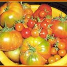 Village Tomato 30+ Seeds (Anatolian - Fresh)