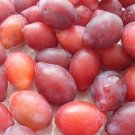 Red Olive Plum Tree 10 Seeds