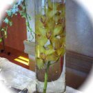 Set of 12 Deluxe Cymbidium Orchids Wedding Reception Glass Vase Centerpiece