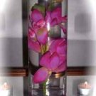 12 Piece Orchids Wedding Reception glass Cylinder Vase Table Centerpieces