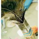 Set Of 12 Peacock Feather Wedding Reception Table Centerpieces - Custom Made To Order