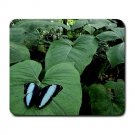 Sky Blue & Black Butterfly Large Mouse Pad