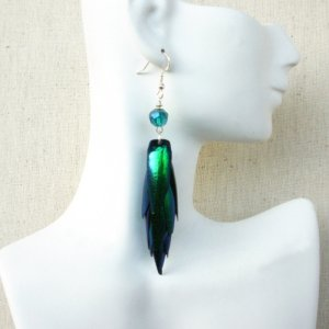 Iridescent Natural Sternocera Jewel Beetle Wing Earrings