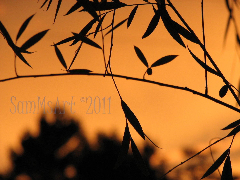 August 3 - 8x10 Print, Digital Fine Art Image Photo - Sunset, summer, fall, Power lines, Clouds