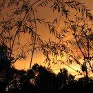 August 5 - 8x10 Print, Digital Fine Art Image Photo - Sunset, summer, fall, Power lines, Clouds
