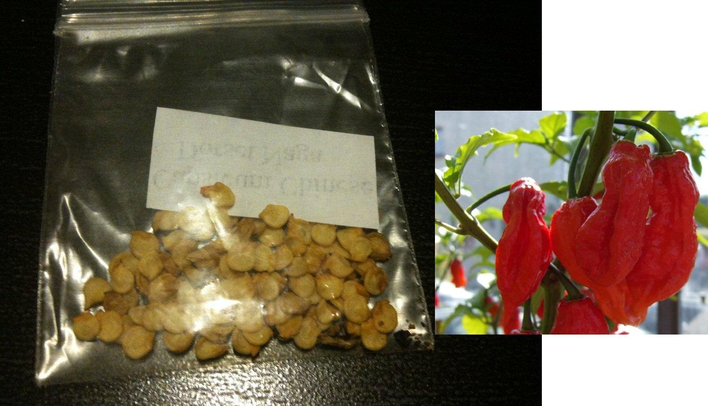 Worlds Hottest Pepper 5 Dorset Naga Seeds Bhut Jolokia