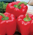 Red Bell Pepper (Capsicum annuum) Sweet Pepper 25 Seeds Big and Juicy Pack Fresh