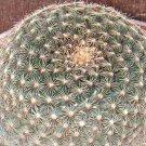 20 Mammillaria Heyderi Seeds- Nipple Cactus, Pincushion Cactus