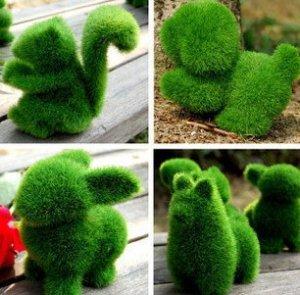 Cute Mini Grassy Pet