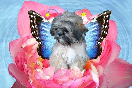 Winged Puppy 8x10