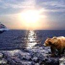 Awaiting sunset