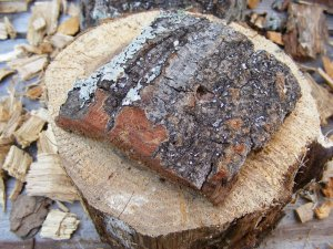 Tree Bark Micro Geocaching Container
