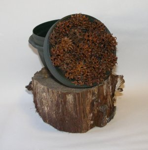 Low Profile Sweetgum Seed Pod Geocaching Container