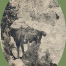 Vintage Photo 1920s HORSE South Dakota BADLANDS Tempest