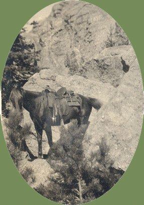 Vintage Photo 1920s HORSE South Dakota BADLANDS Tempest