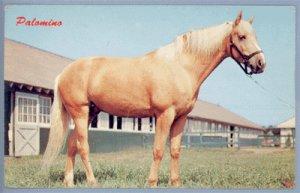 Vintage Postcard HORSE Palomino DEXTER PRESS 1950s