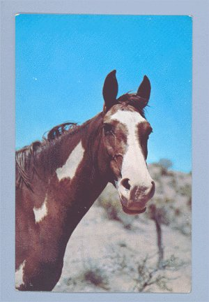 Vintage Postcard ALFRED MAINZER Red & White Horse 1950s