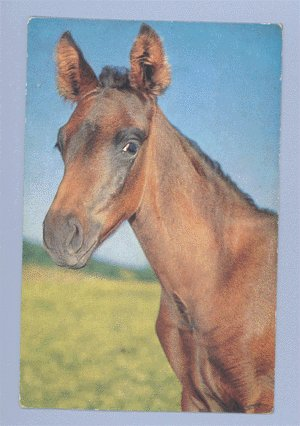 Vintage Postcard ALFRED MAINZER Red & Black Horse 1950s
