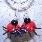 Lovely Lady Bug Earrings