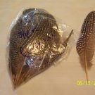 Guinea Wing Feathers - 3/4 oz