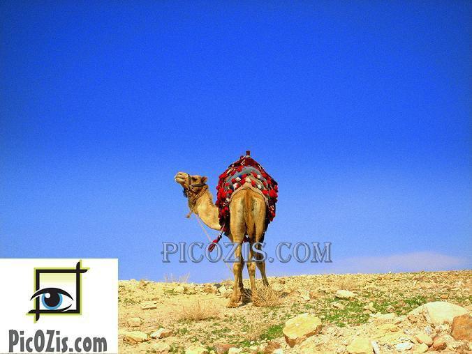 """VAN006201109 - Camel - 13x18cm (5x7"""")"""