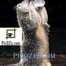 "VAN008201109 - Cute animal - 15x20cm (6x8"")"