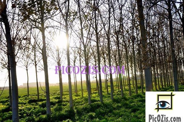 "BLA002201109 - Landscape - 28x35cm (11x14"")"