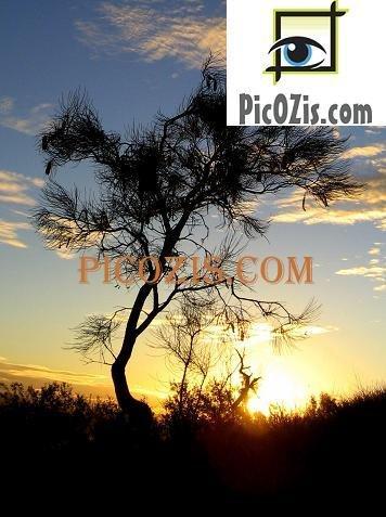 """VSU003201109 - Sunset in Alice Springs - 15x20cm (6x8"""")"""