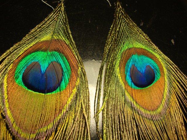 Peacock Feather Earrings Pair