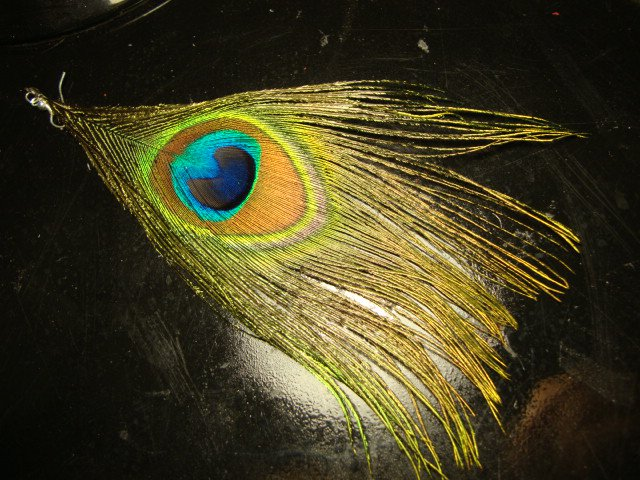 Single Peacock Feather Earring
