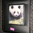 Decorative 360 Night Light In Gift Box : Panda  #114