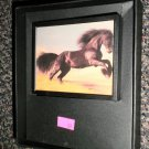 Decorative 360 Night Light In Gift Box : Black Beauty  #081