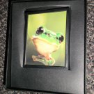 Decorative 360 Night Light In Gift Box : Frog   #090